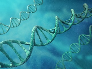 Telomere length may aid in predicting lung cancer risk