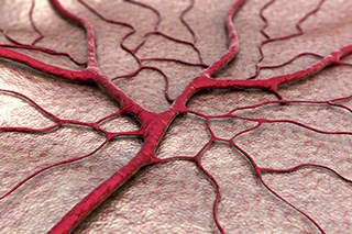 Angiogenesis Inhibitors (Fact Sheet)