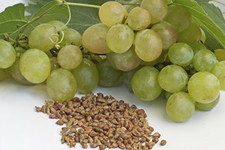 Grape seed promising against colon cancer