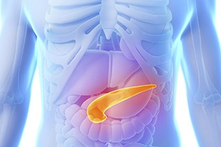 Single protein that shuts down pancreatic cancer growth is identified