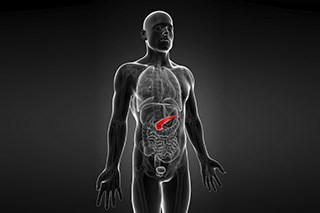 People with a family history of pancreatic cancer at increased risk for developing the disease