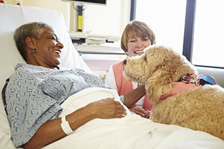 Therapy animals can provide emotional support for those undergoing cancer treatment.