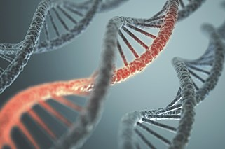 A genetic variation in the FOPNL gene can decrease MM survival.
