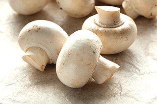 The white button mushroom may hold potential for cancer treatment.