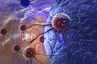 The action of M2 macrophages may actually help cancer spread.