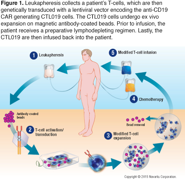 Reprogramming the Immune System to Target Cancer: Chimeric Antigen ...