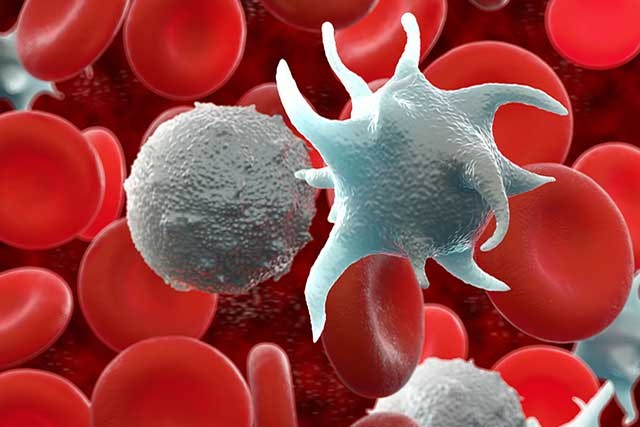 In myeloproliferative neoplasms, too many blood stem cells become one or more types of blood cells.