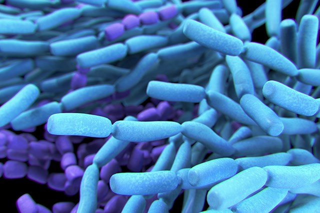 Bacteria in Probiotics Carry Potential Risks for Immunocompromised Patients