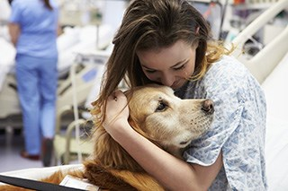Therapy animals may provide emotional support for those undergoing cancer treatment.