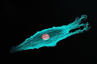 Dabrafenib Plus Trametinib Continue to Show Survival Benefit in BRAF-mutant Metastatic Melanoma