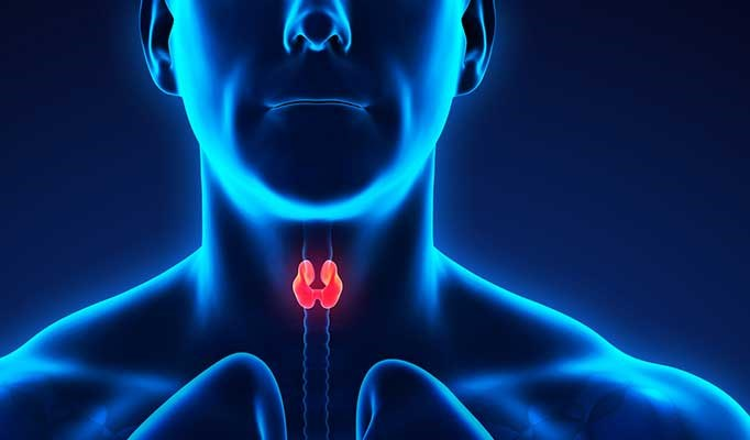 Male Thyroid Cancer Survivors Face Higher CVD Risk
