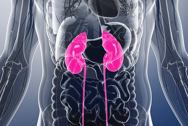 Study Compares Treatment Options for T1a Renal Cancer