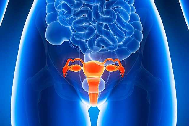 Adding Trastuzumab to Uterine Serous Carcinoma Treatment Extended PFS