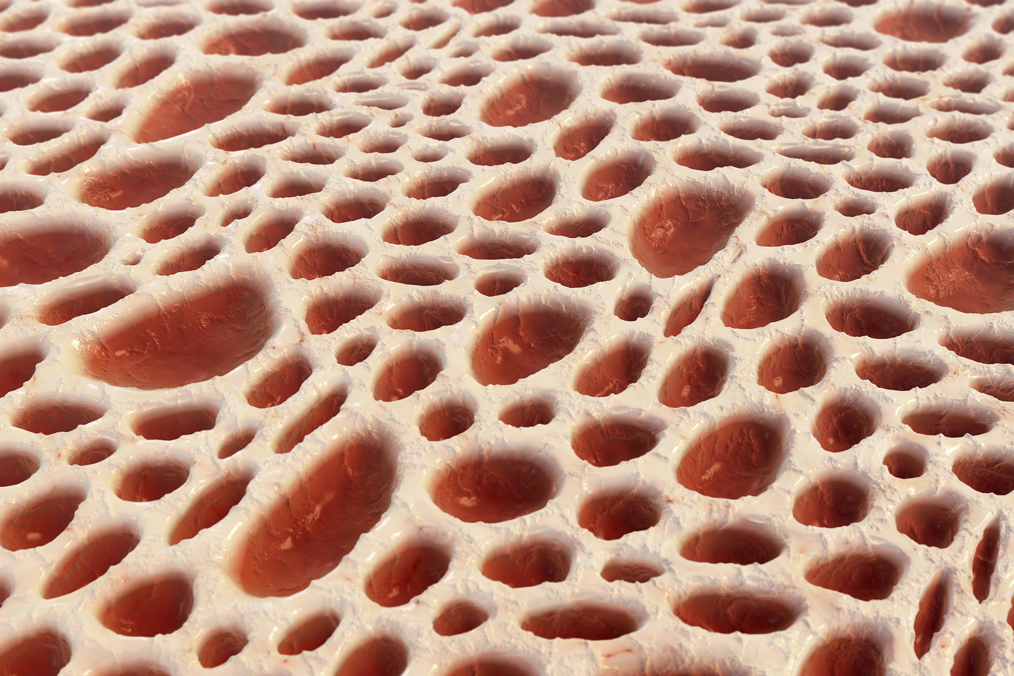 Close-up view of spongy bone and red bone marrow.